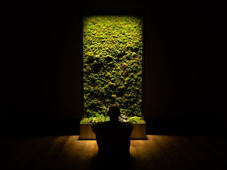 Why Incorporate Moss Walls into Architecture, © AEC Daily