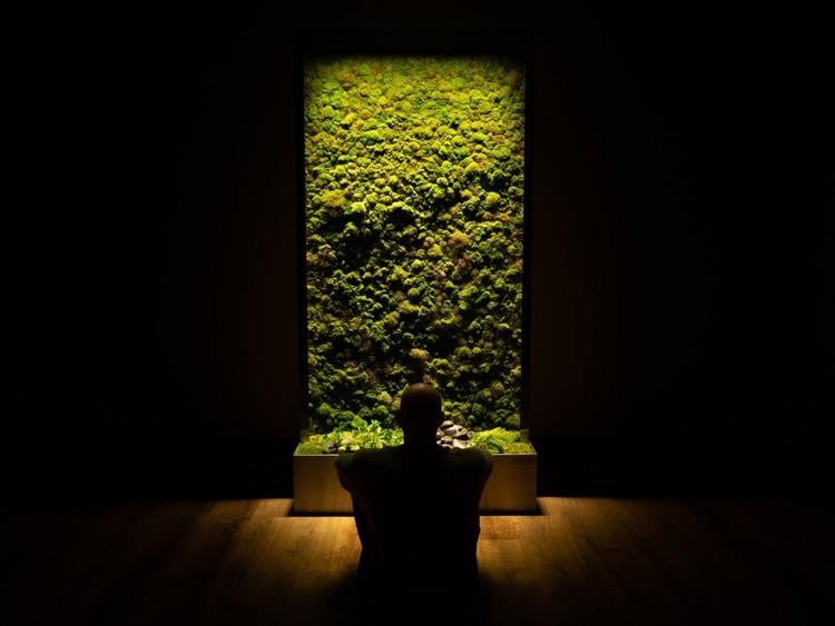 Por qué incorporar paredes de musgo en la arquitectura, © AEC Daily