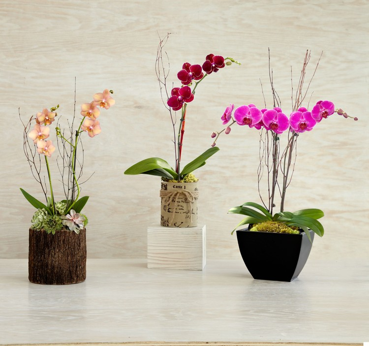 Orchid plants. Image © Flickr user ProFlowers