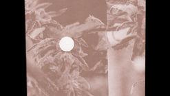 CLOG x Cannabis