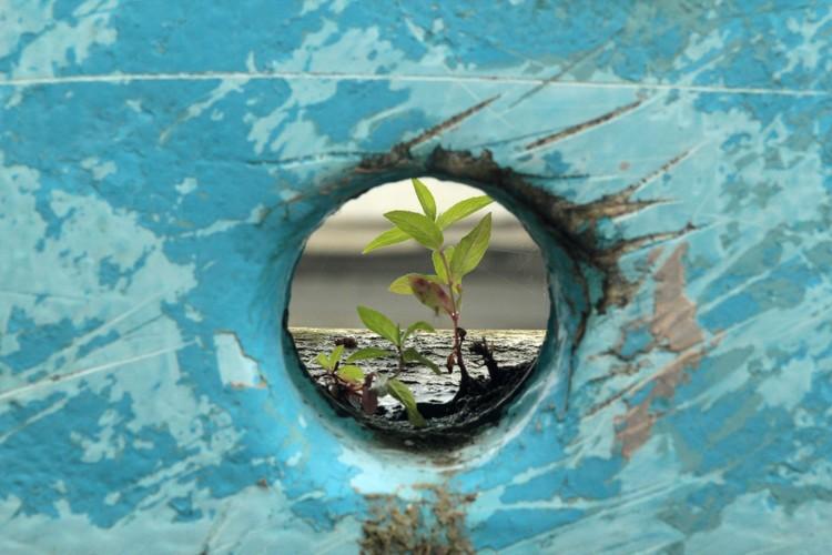 Chamada da Projectare, revista de arquitetura e urbanismo da FAURB UFPEL, Boat Plant Blue