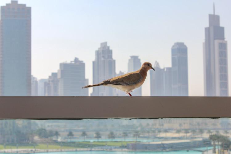 Qué vidrio elegir para evitar que las aves choquen con los edificios, vía Ekaterina Knopikova in Shutterstock