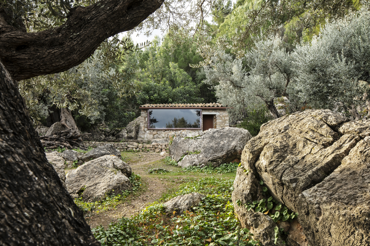 The Olive Houses / mar plus ask