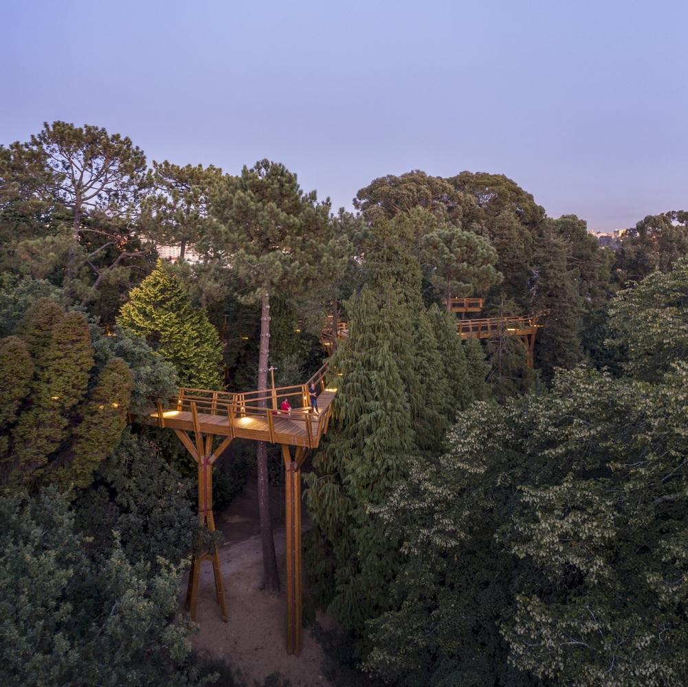 Treetop Walk / Carlos Castanheira