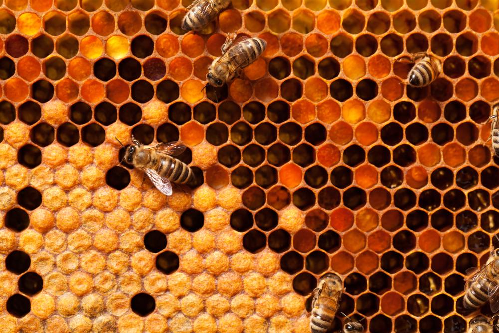 La increíble arquitectura de las abejas,Apis Melifera. © BigBlueStudio / Shutterstock