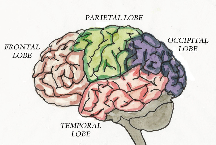 The mind is not sealed in the skull as has often been depicted, but extends throughout the body.. Image Courtesy of Oro Editions
