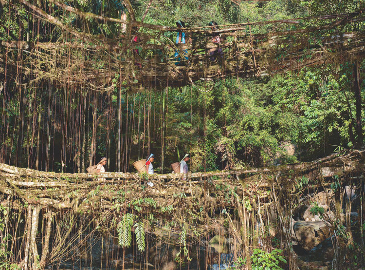 Puentes de raíces vivientes - Pueblo Khasis (India). Image © Pete Oxford