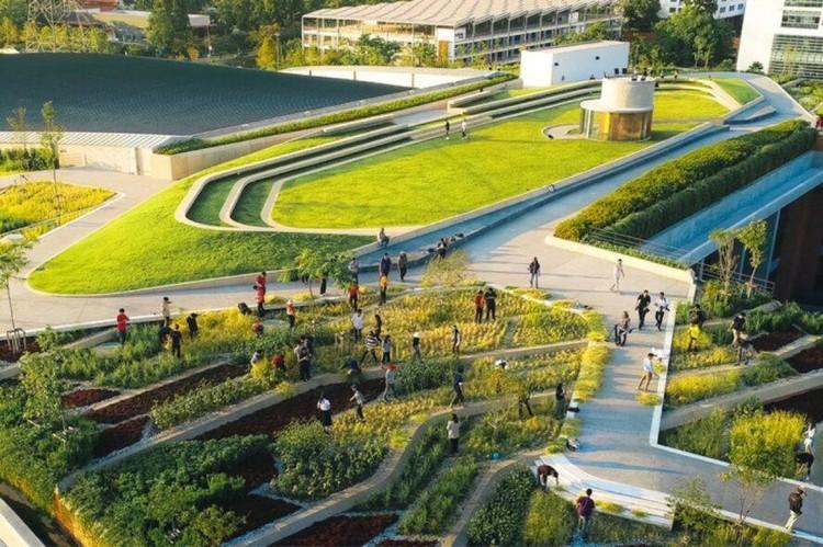 Cobertura verde produz 20 toneladas de alimentos por ano, © Panoramic Studio | LANDPROCESS