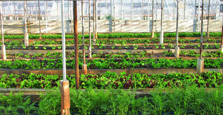 Agricultura urbana pode alimentar 20 milhões de pessoas em São Paulo, Imagem cortesia de CicloVivo. Via Pixabay