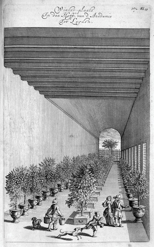 Winter-plaats in den Hoff van d'Academie Tot Leyden, engraving, Johannes Commelin, 1676 / The LuEsther T. Mertz Library of the New York Botanical Garden. Image Courtesy of Princeton Architectural Press