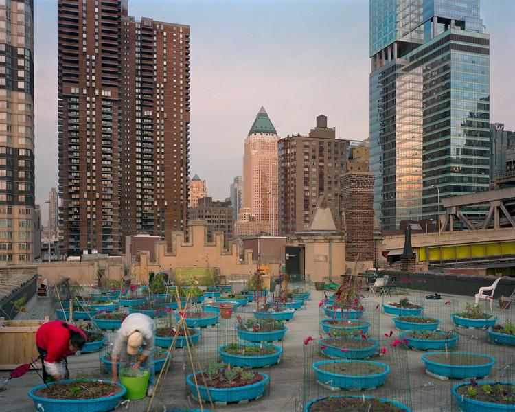 O futuro da alimentação é flexível, autônomo e passa pelas cidades, Hells Kitchen Farm Project, Hell's Kitchen, Nova Iorque. Imagem © Rob Stephenson for the Design Trust for Public Space