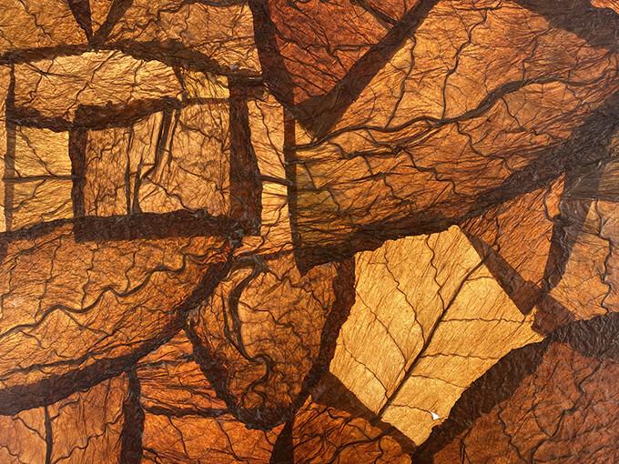 Conexión (detail of tobacco leaves) by Lidia León Cabral. Image © Luis Nova
