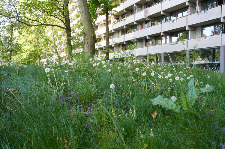 Amsterdam Joytoost Food Forest, Johannes Schwartz, 2020 in samenwerking met Arbaniahov en Proxis' Amsterdam Joytoost Food Forest Community.  Afbeelding © Johannes Schwartz