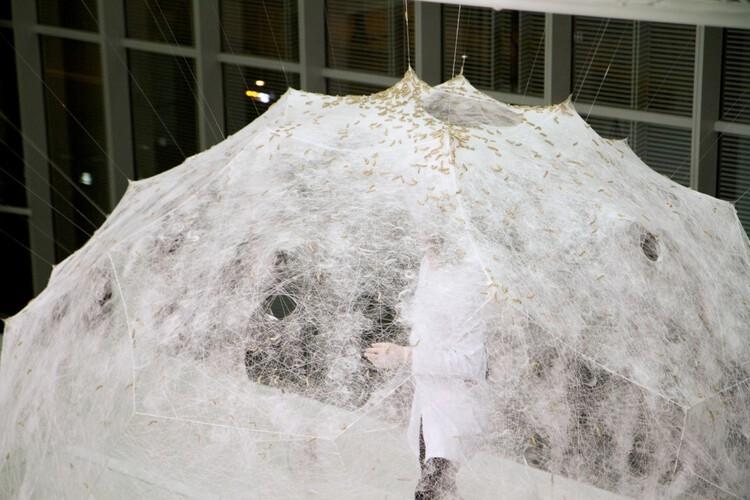 Aprendiendo de la naturaleza: Materiales que unen tecnología, arquitectura y arte, Pabellón de seda. Image © Steven Keating