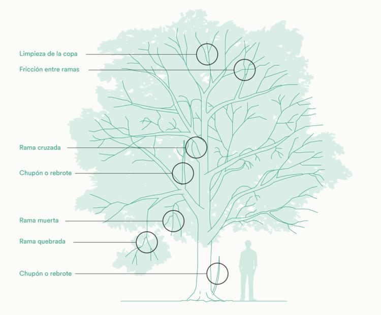 Fundación Mi Parque lanza manual de manejo del arbolado urbano, Cortesía de Fundación Mi Parque y Transelec
