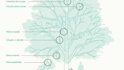 Fundación Mi Parque lanza manual de manejo del arbolado urbano