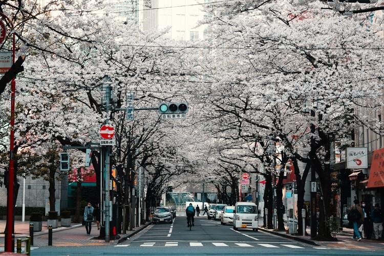 Turismo digital: quatro formas de visitar cidades sem sair de casa, Tóquio, Japão. Créditos: Agathe Marty