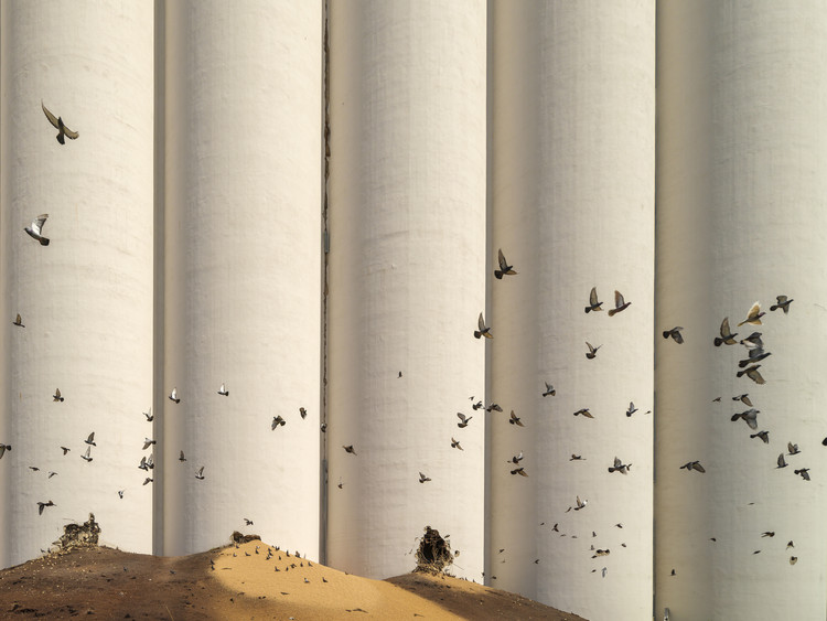Beirut, un año después: reconstrucción cívica en medio de una nación devastada, Pájaros del infierno. Image © Dia Mrad
