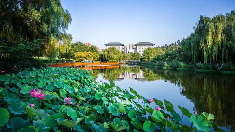 Дноуглубительное озеленение.  Изображение © Цзинь Чжан
