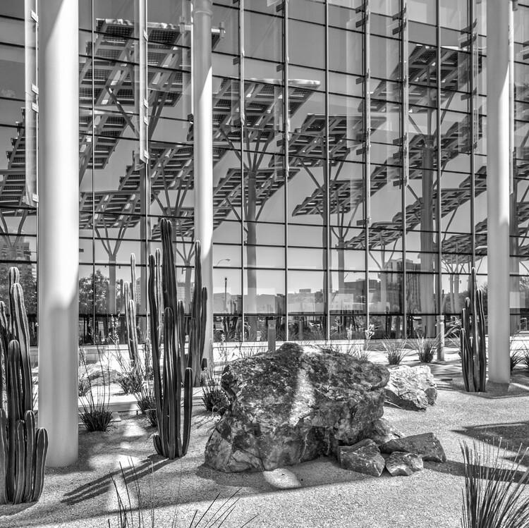 An urban forest in Las Vegas.  KGA Architecture, Las Vegas, United States.  Photo © Ken McCown